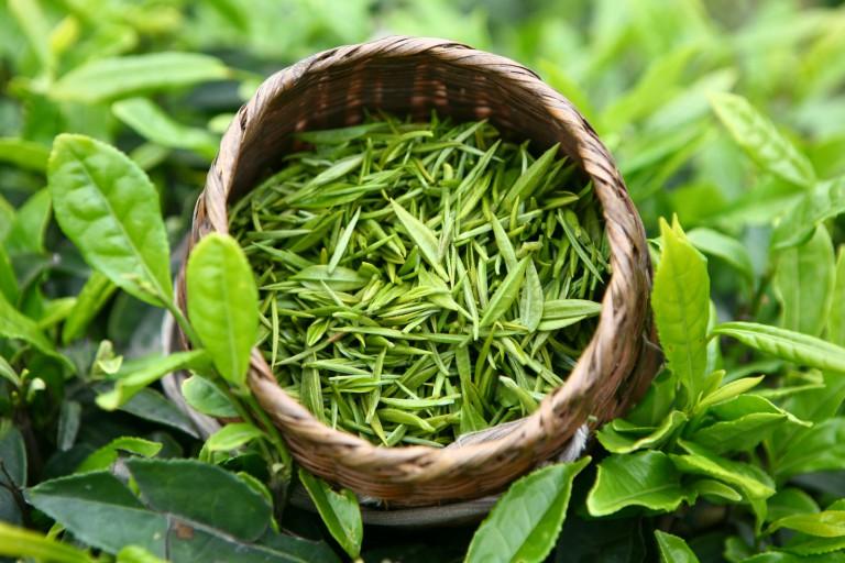 Зелёный чай в продаже!