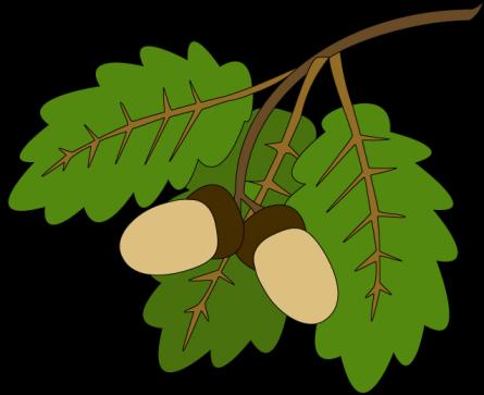Веники дубовые и берёзовые